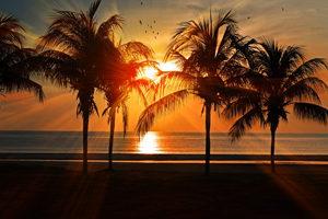 Photo Palmiers Vacances