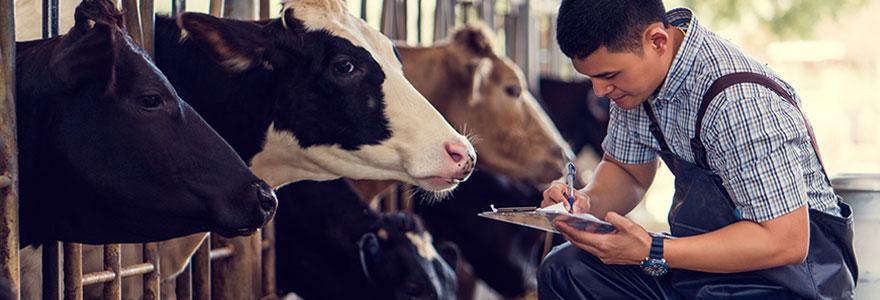 Expert en nutrition et santé animale